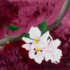 Apple Blossoms I Jenny George Acrylic on Paper £75 (framed print)