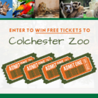 Enter Colchester Zoo Competition